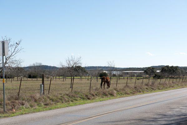 horse Bulverde Lane